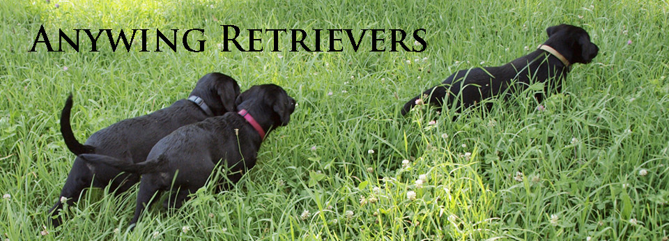 Anywing Retrievers